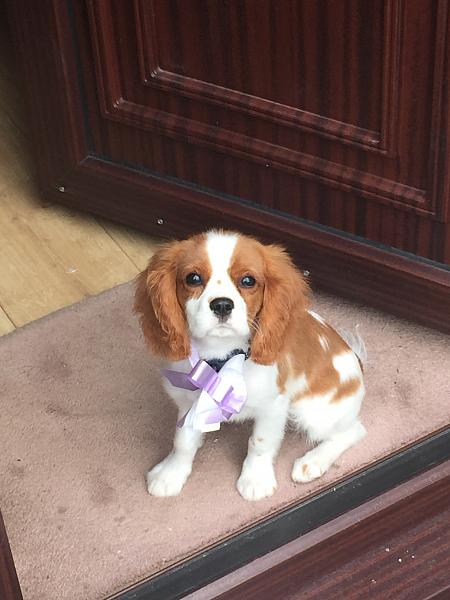 Monty the Dog had a hair cut this week (the bow wasn't put on him by me, it was the ladies at the puppy parlour - honestly!!!)